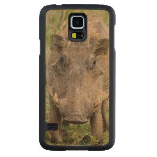 Three Warthog Piglets Suckle On Their Mother Maple Galaxy S5 Case