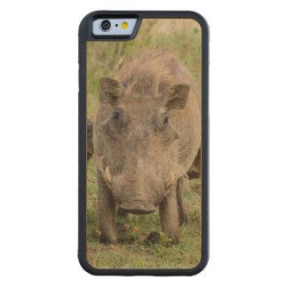Three Warthog Piglets Suckle On Their Mother Maple iPhone 6 Bumper Case