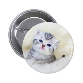 Three weeks old young cat sitting on sheep fur 2 inch round button