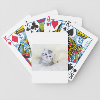 Three weeks old young cat sitting on sheep fur bicycle playing cards