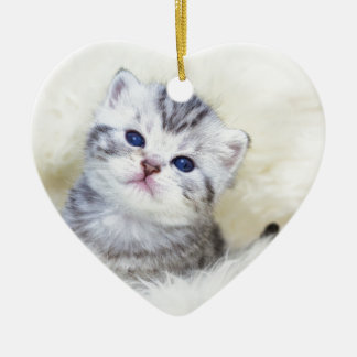 Three weeks old young cat sitting on sheep fur ceramic ornament