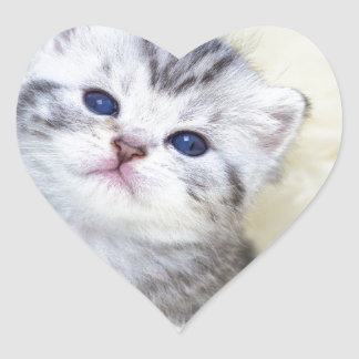 Three weeks old young cat sitting on sheep fur heart sticker