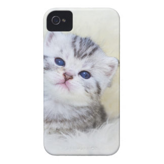 Three weeks old young cat sitting on sheep fur iPhone 4 cover