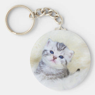 Three weeks old young cat sitting on sheep fur keychain