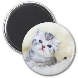 Three weeks old young cat sitting on sheep fur magnet