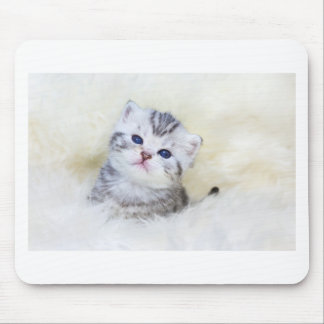 Three weeks old young cat sitting on sheep fur mouse pad