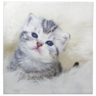Three weeks old young cat sitting on sheep fur napkin