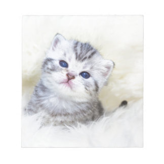 Three weeks old young cat sitting on sheep fur notepad