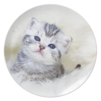 Three weeks old young cat sitting on sheep fur plate