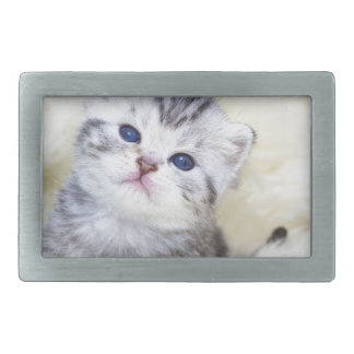 Three weeks old young cat sitting on sheep fur rectangular belt buckles