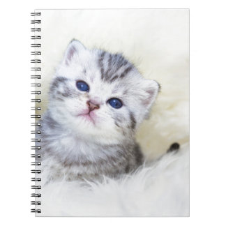 Three weeks old young cat sitting on sheep fur spiral note books