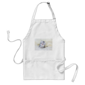 Three weeks old young cat sitting on sheep fur standard apron