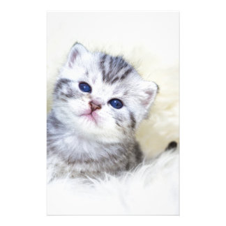 Three weeks old young cat sitting on sheep fur stationery