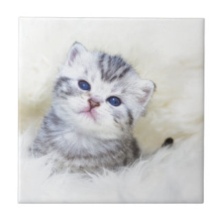 Three weeks old young cat sitting on sheep fur tiles