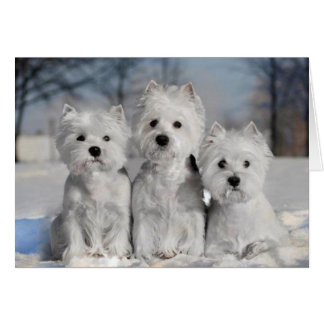 Three Westies in the Snow Card