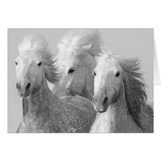 Three White Horses Greeting Card