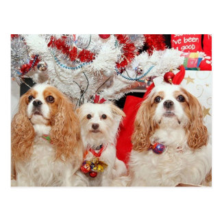 Three Wise Doggies Christmas Postcard