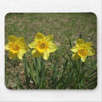 Three Yellow Daffodils Mouse Pad