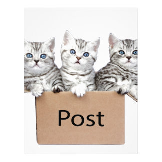 Three young cats in cardboard box on white personalized letterhead