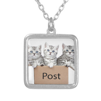 Three young cats in cardboard box on white silver plated necklace