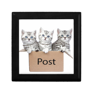Three young cats in cardboard box on white trinket box
