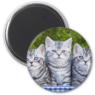 Three young silver tabby cats in checkered basket 2 inch round magnet