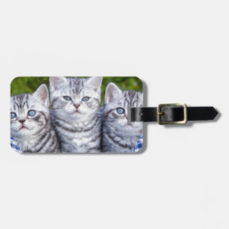 Three young silver tabby cats in checkered basket bag tag