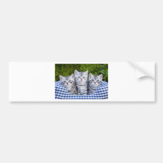 Three young silver tabby cats in checkered basket bumper sticker