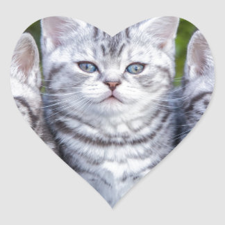 Three young silver tabby cats in checkered basket heart sticker