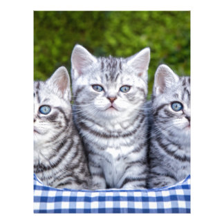 Three young silver tabby cats in checkered basket letterhead design