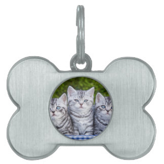 Three young silver tabby cats in checkered basket pet tags
