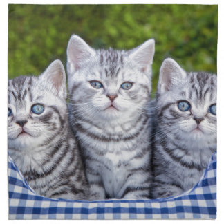 Three young silver tabby cats in checkered basket printed napkin