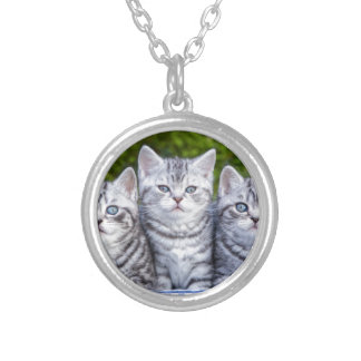 Three young silver tabby cats in checkered basket silver plated necklace
