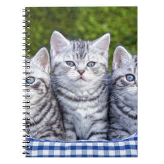 Three young silver tabby cats in checkered basket spiral notebooks