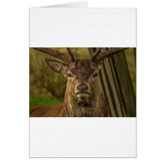 Thug deer card