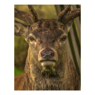 Thug deer letterhead design