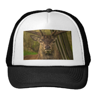 Thug deer trucker hat