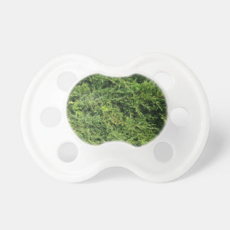 Thuja tree photo background pacifier