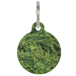 Thuja tree photo background pet tag
