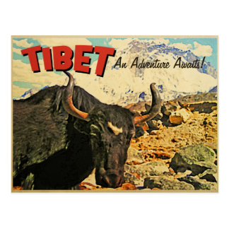 Tibet Adventure Awaits Ox Postcard
