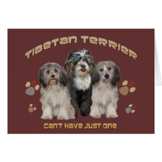 Tibetan Terrier All Occasion Greeting Card