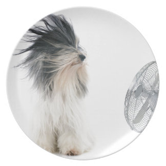 Tibetan terrier and his fan dinner plates