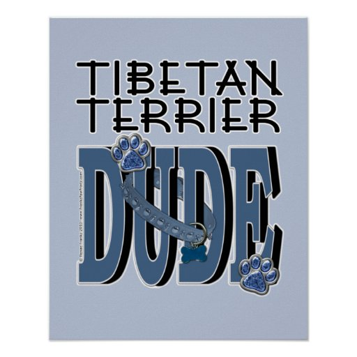 Tibetan Terrier DUDE Poster