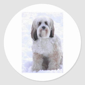 Tibetan Terrier Sable and White Classic Round Sticker