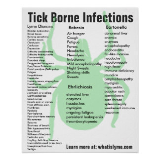 Tick Borne Infections Symptoms Educational Poster