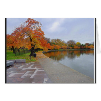 Tidal Pool Fall Colors Card