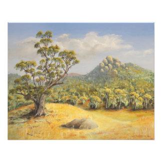Tidbinbilla, Australia Photographic Print