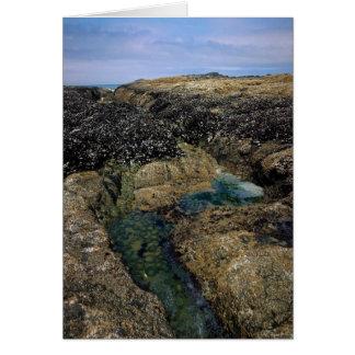 Tide Pools at Bob Creek Card