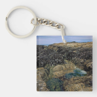 Tide Pools at Bob Creek Keychain