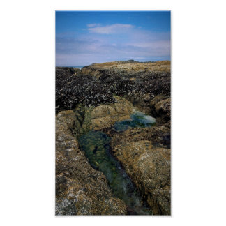 Tide Pools at Bob Creek Poster